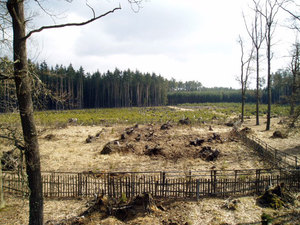 Zalesněná kalamitní plocha po vichřici Emma 2008 (Jemčina)
