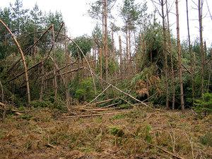 Jeden zmnoha borových porostů zničených sněhovým polomem vlednu 2006 (Jemčina)